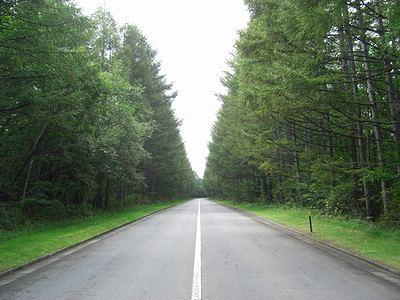 落葉松並木のメインアプローチ