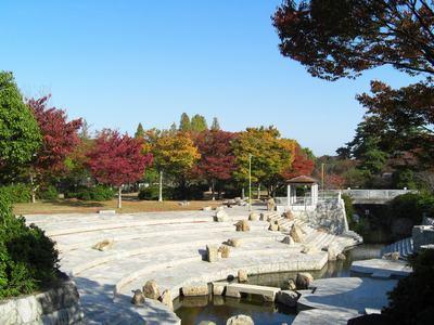今朝の公園の紅葉