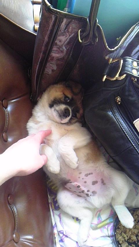 子犬の支援物資