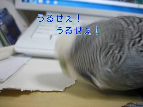はなしっぽ③