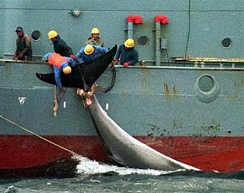 whaling8