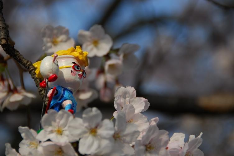 桜たま 063