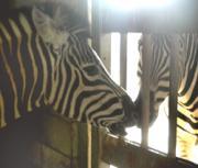 亜熱帯動植物園で