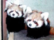 東松山市岩殿のこども動物自然公園