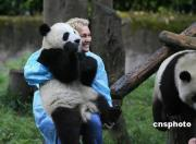 厳重な消毒のあとパンダと触れ合うボランティアスタッフ
