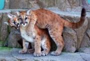 日本平動物園提供