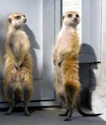 周南市の徳山動物園で