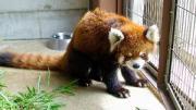 鯖江市西山動物園で