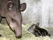 19日、鹿児島市の平川動物公園