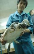 2007年11月20日午後3時45分,北海道小樽市のおたる水族館で