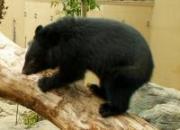 上野動物園提供