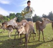 奈良市の奈良公園で2007年11月26日午前9時27分、北村隆夫撮影