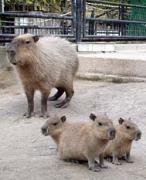 鹿児島市の平川動物公園