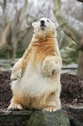ドイツ・ベルリン動物園で