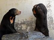 徳山動物園提供