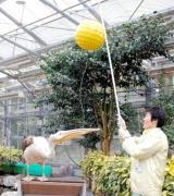 くす玉割り、自らお祝い/松江フォーゲルパーク