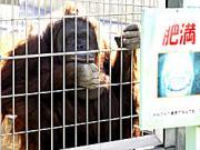 天王寺動物園で