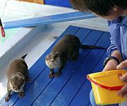高知市浦戸の桂浜水族館で