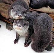越前松島水族館提供