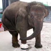 広島県福山市芦田町で、福山市立動物園提供