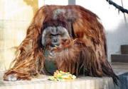 静岡市駿河区の日本平動物園で