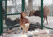 長野市の城山動物園で