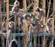 15日午後、大分市の高崎山自然動物園で