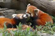 川崎市の夢見ケ崎動物公園で