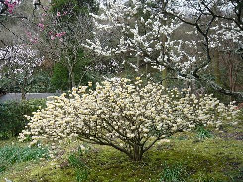 東慶寺 お花