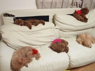 ソファーで昼寝中。