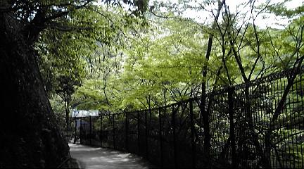 六甲山系201151528