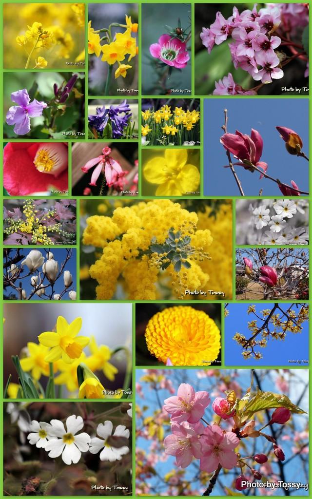 3月の花コラージュ