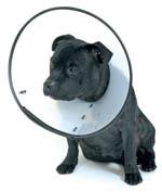 091016エリザベスカラー犬2