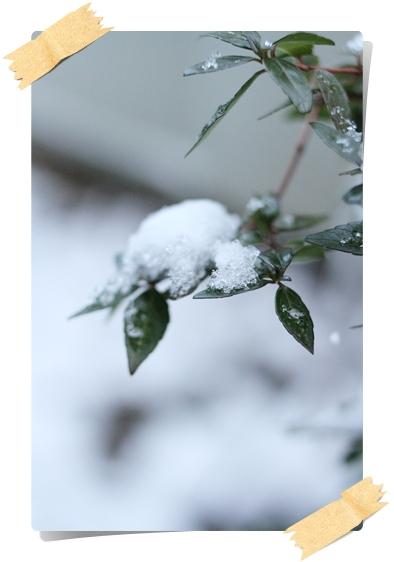 IMG_0957葉っぱ雪