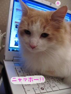 コピー (2) ~ IMG_4055