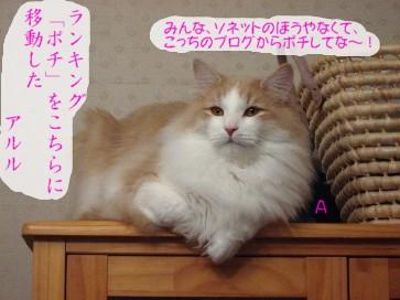コピー ~ IMG_4063