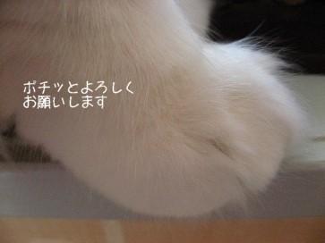 コピー ~ IMG_3740