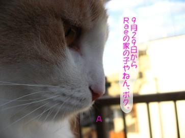 コピー ~ IMG_3743