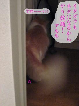 コピー ~ IMG_3684