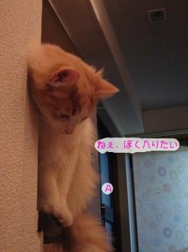 コピー ~ IMG_4180