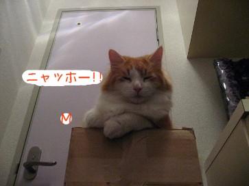 コピー ~ IMG_4164