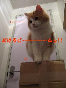 コピー ~ IMG_4155