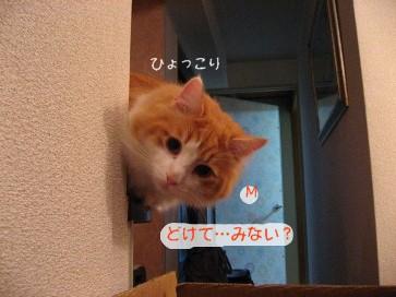コピー ~ IMG_4148