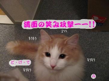 コピー ~ IMG_4145