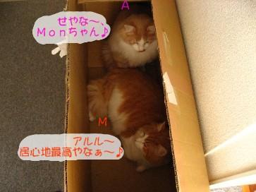 コピー ~ IMG_4220