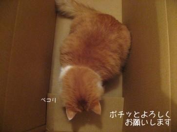 コピー ~ IMG_4217