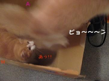 コピー ~ IMG_4203