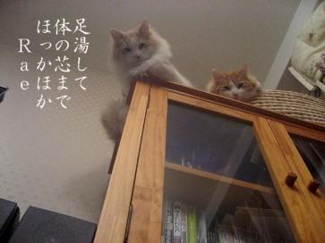 コピー ~ IMG_4269