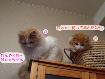 コピー ~ IMG_4261