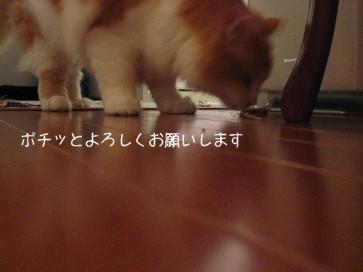 コピー ~ IMG_4295